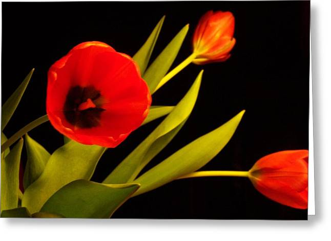 Tulip Arrangement 2 Greeting Card by Peter Mooyman