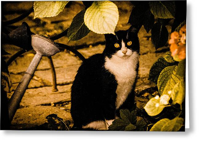 Venice, Italy - Venetian Cat Greeting Card