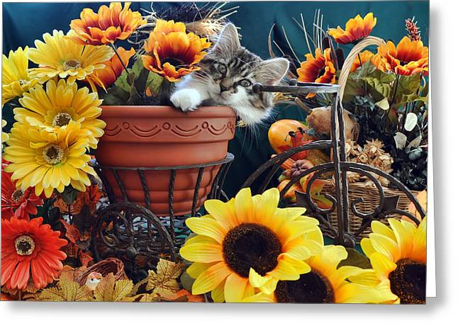 Venus - Cute Kitten In Bicycle Flower Planter - Kitty Cat In Sunflowers And Gerberas Greeting Card by Chantal PhotoPix