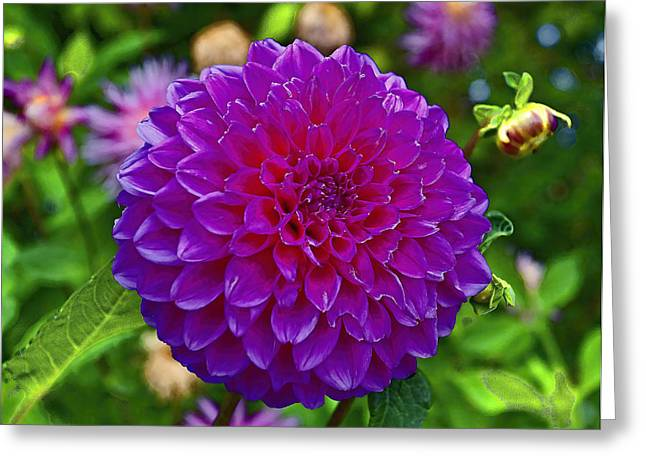 Walter Peak Dahlia Greeting Card