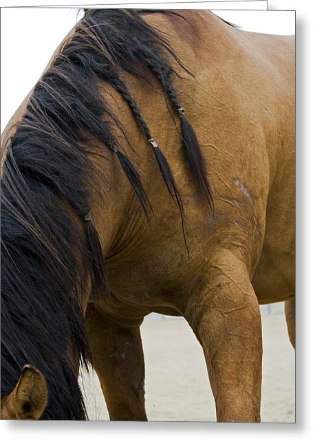Greeting Card featuring the photograph War Horse by Lorraine Devon Wilke
