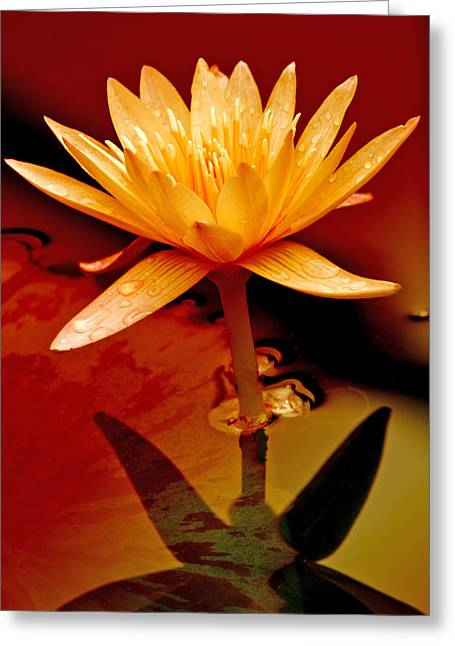 Water Lily 1 Greeting Card by Julie Palencia
