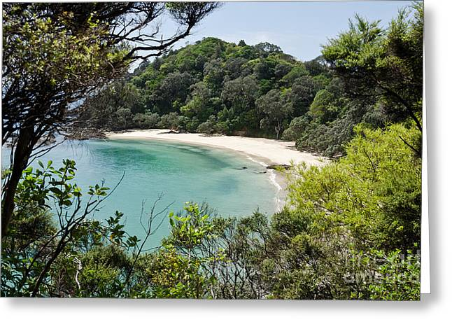 Whale Bay In New Zealand Greeting Card