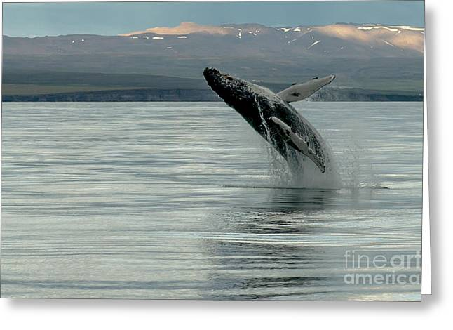 Whale Jumping Greeting Card