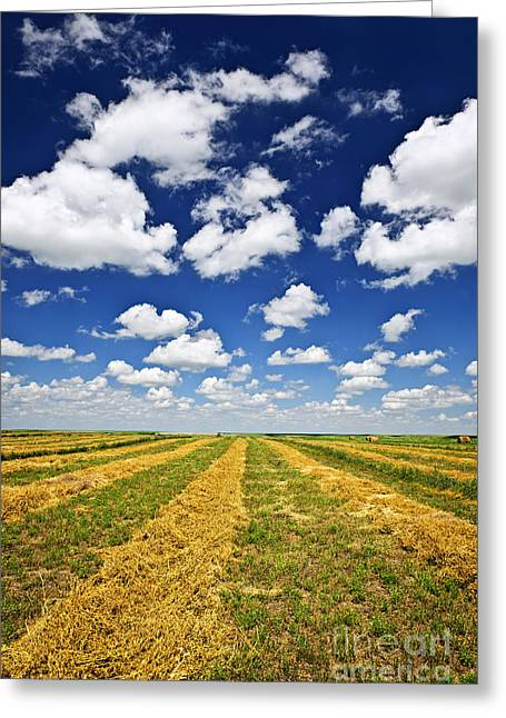 Wheat Farm Field At Harvest In Saskatchewan Greeting Card