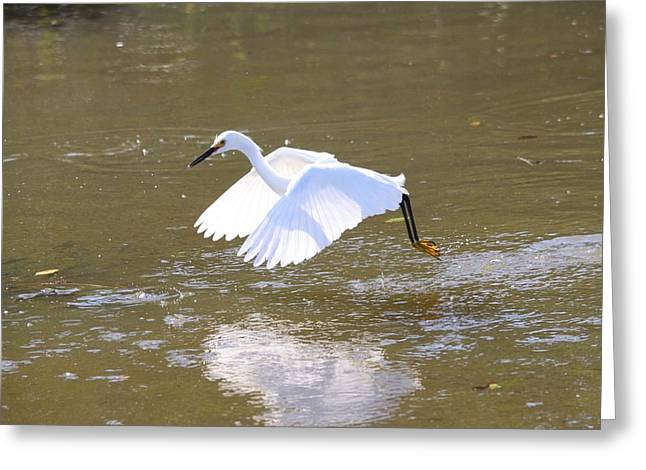 Greeting Card featuring the photograph White Egret by Jeanne Andrews