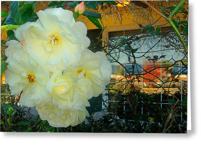 White Rose And The Reflection Greeting Card by David  Brown