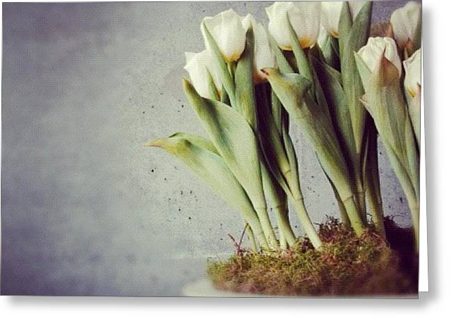 White Tulips In Bowl - Gray Concrete Wall Greeting Card