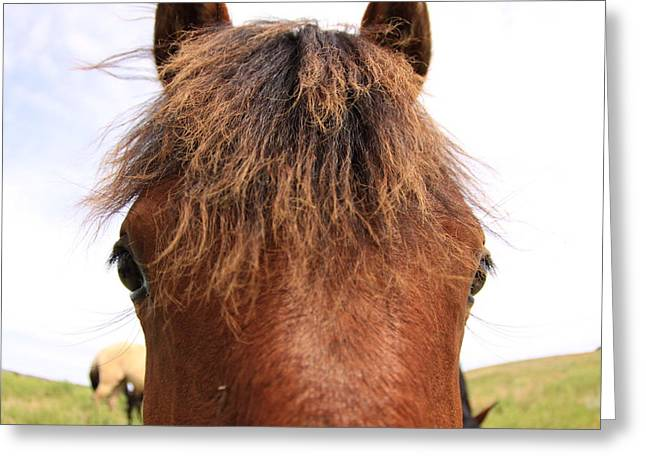 Greeting Card featuring the photograph Wild Mustang by Kate Purdy