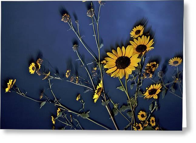 Wildflowers Blooming On The Kansas Greeting Card by Jim Richardson