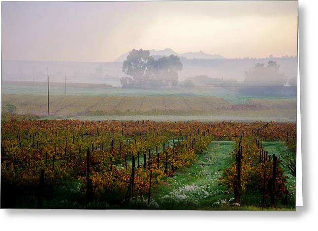 Greeting Card featuring the photograph Wine Field by Werner Lehmann