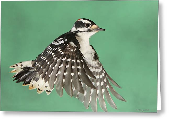 Greeting Card featuring the photograph Wing Flaps Down by Gerry Sibell
