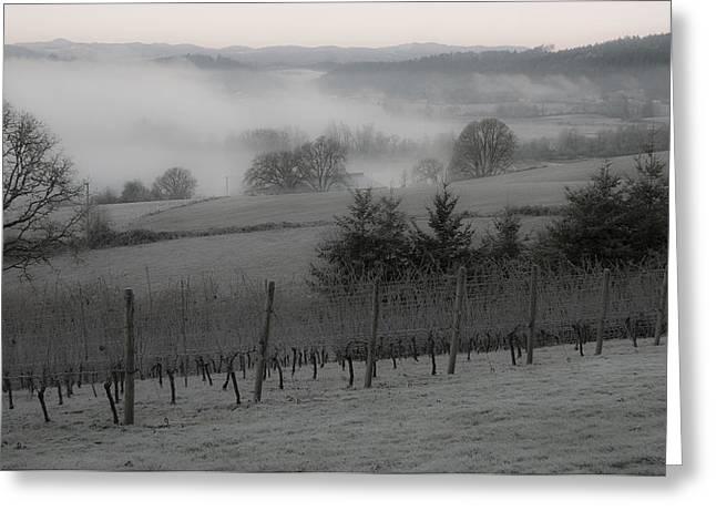 Winter Vineyard Greeting Card by Jean Noren