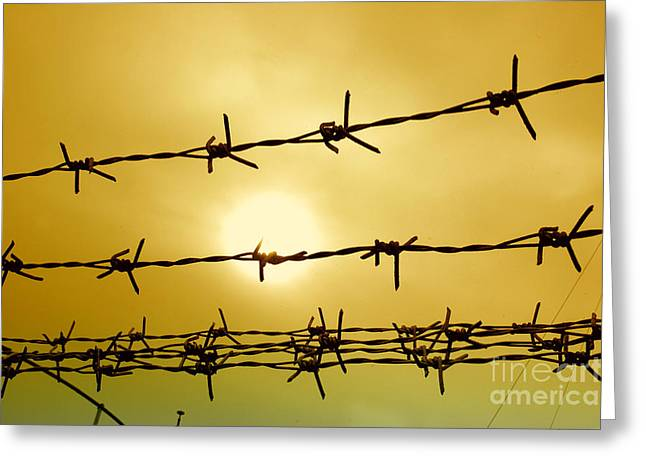 Wire Fence Greeting Card by Antoni Halim