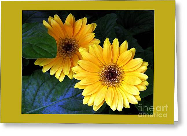 Yellow Dahlias Greeting Card by Dale   Ford