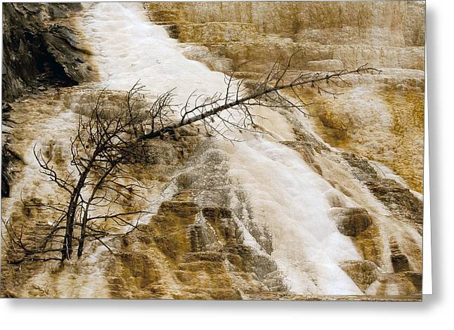 Greeting Card featuring the photograph Yellowstone Color by J L Woody Wooden