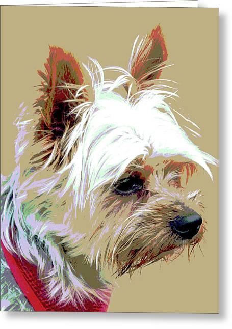 Yorkshire Terrier Greeting Card by Dorrie Pelzer