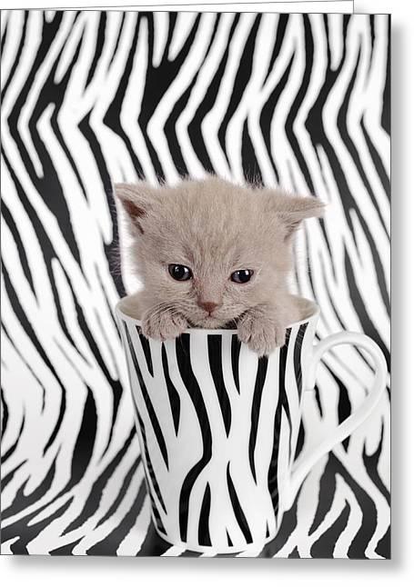 Zebra Cat Greeting Card by Waldek Dabrowski
