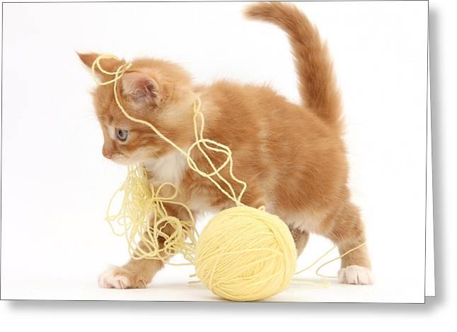 Ginger Kitten Greeting Card by Mark Taylor