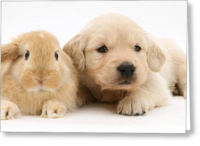 Rabbit And Puppy Greeting Card by Jane Burton