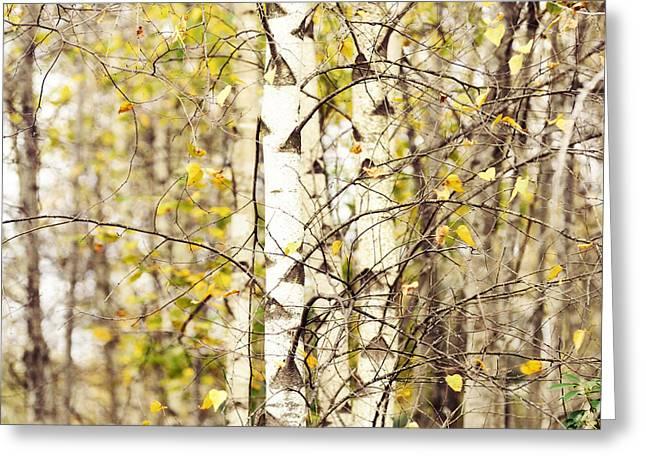 Autumn Series Greeting Card