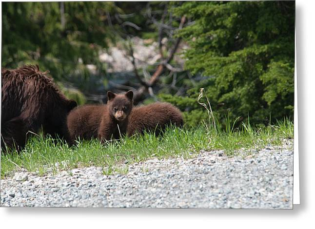 Black Bear Family Greeting Card