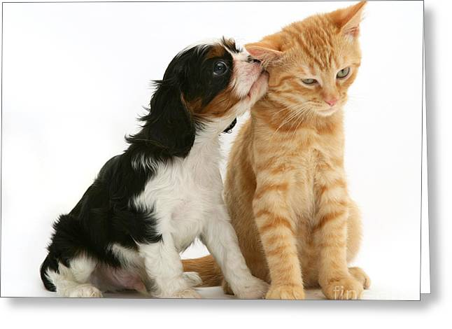 Puppy And Kitten Greeting Card by Jane Burton