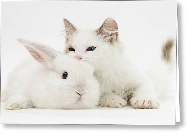 Rabbit And Kitten Greeting Card by Jane Burton