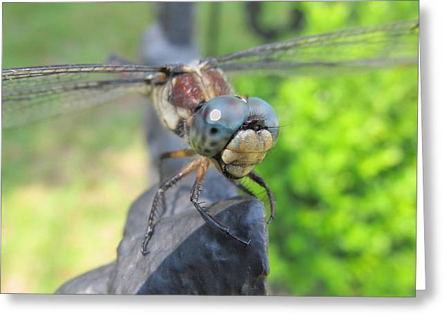 Dragonfly Greeting Card by Michele Caporaso