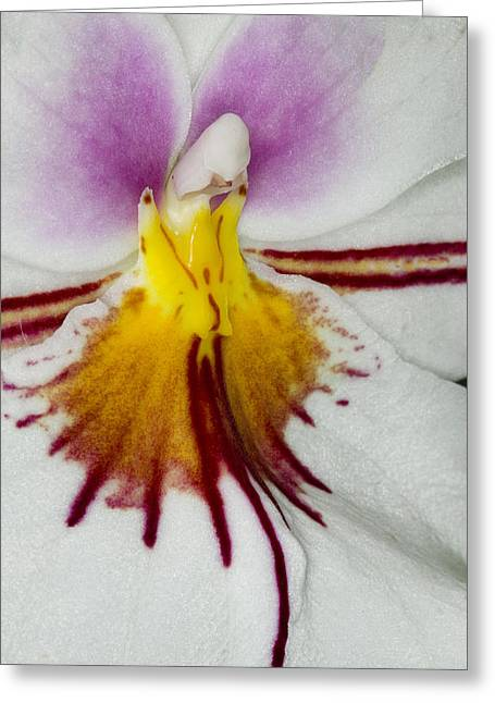 Exotic Orchid Flowers Of C Ribet Greeting Card by C Ribet