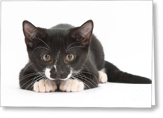 Kitten Greeting Card by Mark Taylor