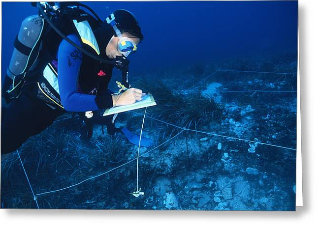Marine Archaeology Greeting Card by Alexis Rosenfeld