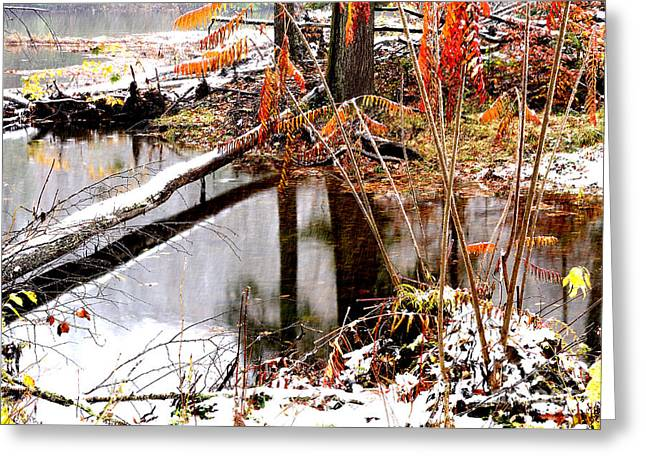 Autumn Snow Monongahela National Forest Greeting Card by Thomas R Fletcher
