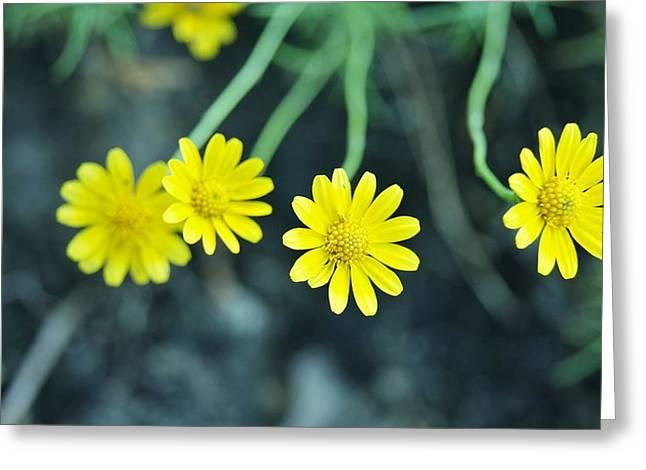 Flower Greeting Card by Gornganogphatchara Kalapun