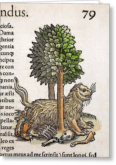 1560 Gesner Myth Of The Glutton Wolverine Greeting Card by Paul D Stewart
