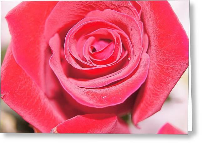 Rose Greeting Card by Gornganogphatchara Kalapun