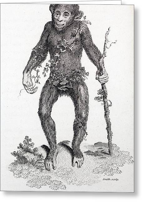 1809 Reprint Of Tyson 1698 Chimpanzee Greeting Card by Paul D Stewart
