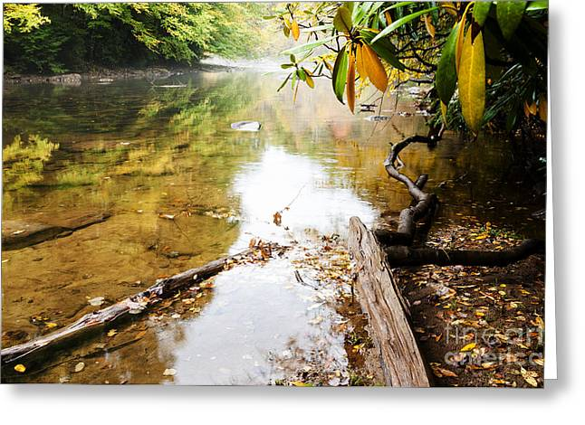 Fall Along Williams River Greeting Card by Thomas R Fletcher
