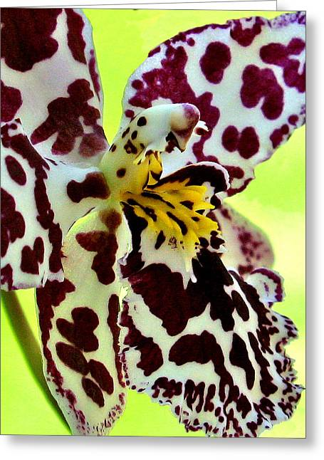 Orchid Flower Bloom Greeting Card by C Ribet