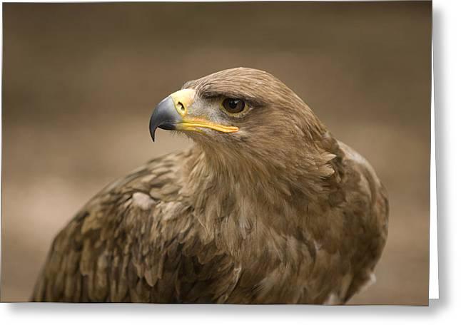 A Tawny Eagle At A Wild Bird Sanctuary Greeting Card by Joel Sartore