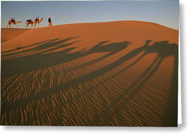 A Tuareg Tribesman Leads His Camels Greeting Card by Carsten Peter