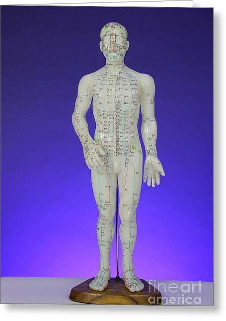 Acupuncture Model Greeting Card by Photo Researchers, Inc.