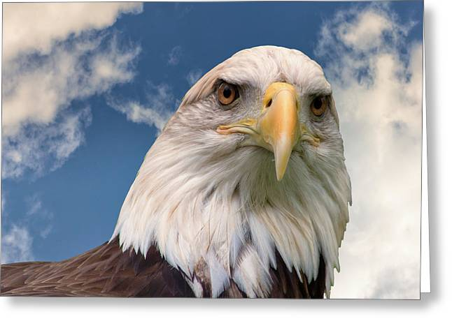 American Bald Eagle Greeting Card by Ken Wolter