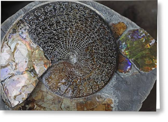 Ammonite Fossil Greeting Card by Dirk Wiersma