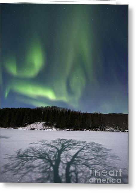 Aurora Borealis Over Sandvannet Lake Greeting Card by Arild Heitmann