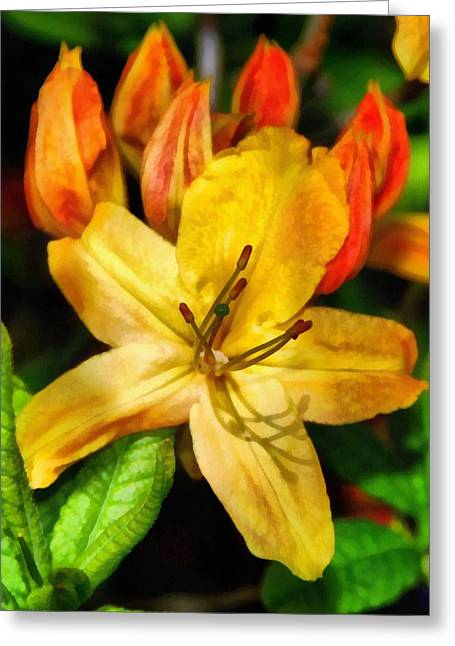 Azalea In Bloom Greeting Card