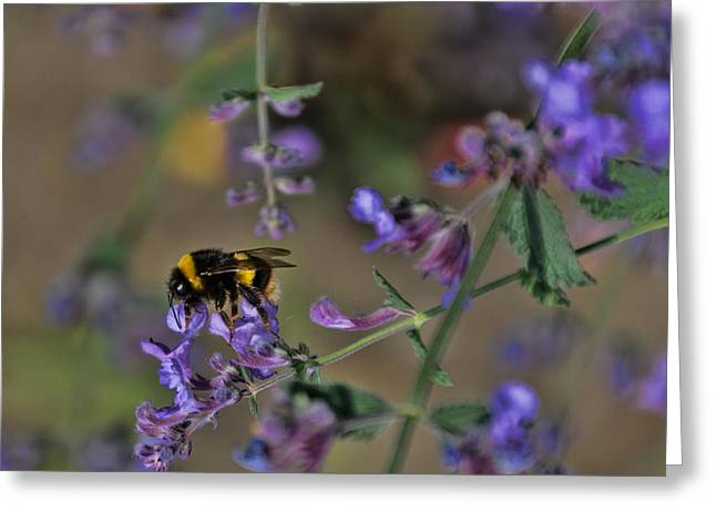 Greeting Card featuring the photograph Bee by David Gleeson