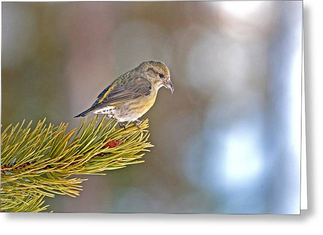 Bird Greeting Card by Elijah Weber