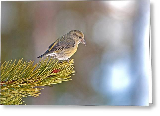 Bird Greeting Card by Elijah Weber