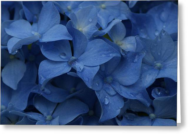 Blue Dew Greeting Card